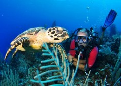 Diving Turtle-2