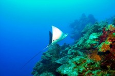 Diving with Red Sail Sports