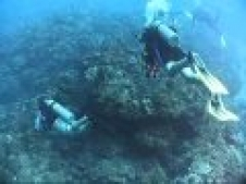 Tortuga Divers, East End, Grand Cayman